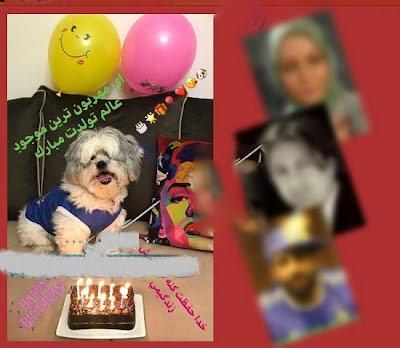 جشن تولد سگ پرستو صالحی ! + عکس های خانوادگی